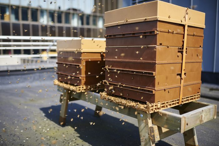 beehives-at-sofitel-brussels-europe-youri-abenchikar-3